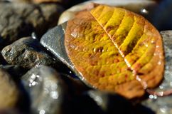 Härligt höstblad på flodkust Arkivfoton