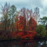 Härligt höstflodlandskap med färgrika träd arkivfoton