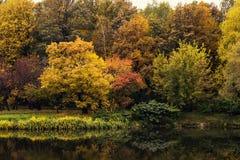Härligt höstlandskap av färgrika träd nära dammet i parkera Fotografering för Bildbyråer