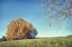 Härligt höstlandskap i en solig dag med björkträd (focu Royaltyfri Fotografi