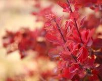Härligt höstlandskap i skogen, röda sidor i solljus royaltyfri fotografi