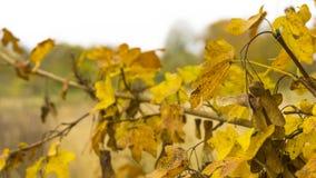 Härligt höstlandskap med gula trädsidor Färgrik fo arkivfoto