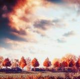 Härligt höstlandskap med träd, fältet och himmel Utomhus- natur för nedgång arkivbild