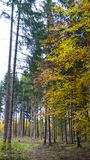 Härligt höstlandskap med träd, grönt och gult Colorfu royaltyfri bild