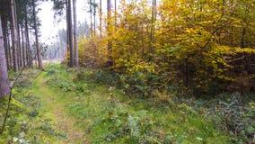 Härligt höstlandskap med träd, grönt och gult Colorfu royaltyfria foton