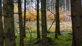 Härligt höstlandskap med träd, grönt och gult Colorfu royaltyfri foto