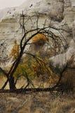 Härligt höstlandskap med träd i eftermiddagen arkivfoto