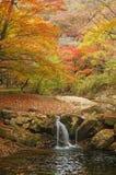 Härligt höstlandskap med vattenfallet i skog Royaltyfri Bild