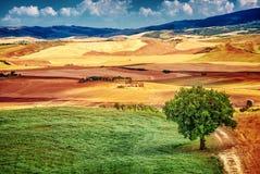 Härligt höstligt landskap Royaltyfri Bild