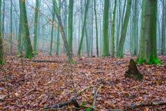 Härligt höstligt skoglandskap Fotografering för Bildbyråer