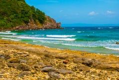 Härligt hav Apo Filippinerna, sikt på östrandlinje Arkivfoton