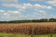 Härligt havrefält i Wisconsin! arkivfoto
