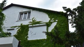 Härligt hus som täckas med grönska royaltyfri fotografi