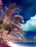 Härligt infrarött skott av palmträd på paradisön Seychellerna royaltyfri fotografi
