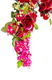 härligt isolerat blom- Arkivbilder