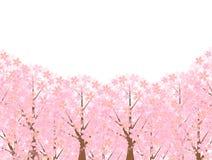 Härligt körsbärsrött träd arkivfoto