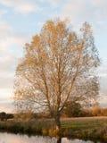 Härligt kalt träd i fie för himmel för solnedgång för bygdhöstväder Royaltyfri Bild