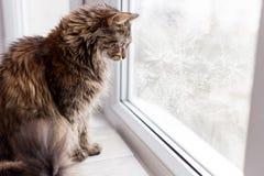 Härligt kattsammanträde i ett djupfryst fönster Arkivfoton