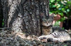 Härligt kattsammanträde nära en trädstam Arkivbilder