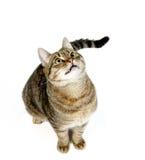 Härligt kattsammanträde på en vit bakgrund Arkivfoton