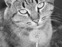Härligt kattslut upp arkivfoto
