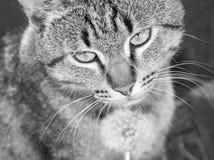 Härligt kattslut upp arkivbilder