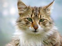 Härligt kattslut upp royaltyfri foto