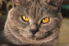 Härligt kattslut upp royaltyfria bilder