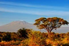 Härligt Kilimanjaro berg efter soluppgång i morgon, Kenya, Afrika Royaltyfri Fotografi