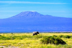 Härligt Kilimanjaro berg och elefant, Kenya, Afrika Royaltyfri Bild