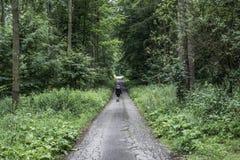 Härligt kvinnafotvandrareanseende på skogslingan som bort ser Kvinnlig på vandring i spöklika mystiska skogar för natur Royaltyfri Fotografi