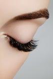 Härligt kvinnligt öga med extrema långa ögonfrans, svart eyelinermakeup Perfekt smink, långa snärtar Closeupmodeögon Arkivfoto