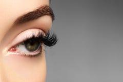 Härligt kvinnligt öga med extrema långa ögonfrans, svart eyelinermakeup Perfekt smink, långa snärtar Closeupmodeögon arkivbilder