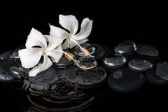 Härligt lågtemperatur- brunnsortbegrepp av den delikata vita hibiskusen, zen Arkivbilder