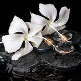 Härligt lågtemperatur- brunnsortbegrepp av den delikata vita hibiskusen, zen Fotografering för Bildbyråer