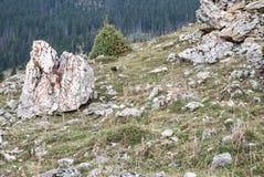 Härligt landskap övre sikt för carpathian berg Arkivfoton