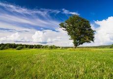 Härligt landskap Fotografering för Bildbyråer