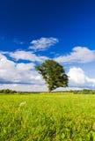 Härligt landskap Royaltyfri Fotografi