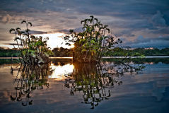 Härligt landskap, amazon rainforest, Yasuni Royaltyfri Foto