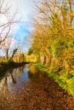Härligt landskap Autumn Pathway gränd Co kork ireland royaltyfria bilder
