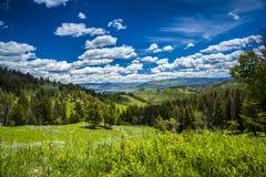 Härligt landskap av ängen och skogen i berg Royaltyfri Bild