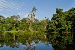 Härligt landskap av den amazon rainforesten Royaltyfri Fotografi