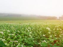Härligt landskap av det stora bovetefältet Arkivbilder