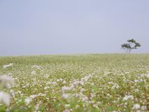 Härligt landskap av det stora bovetefältet Fotografering för Bildbyråer