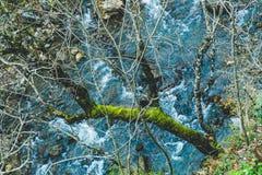 Härligt landskap av en skog ovanför en liten ren flod arkivfoto