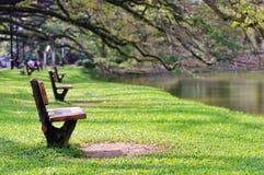 Trädgård vid lakesiden Royaltyfria Bilder