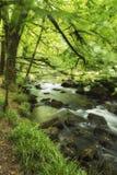 Härligt landskap av floden som flödar till och med den frodiga skogen Golitha Royaltyfri Foto