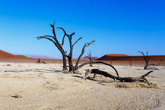Härligt landskap av gömda Vlei i den Namib öknen Royaltyfri Foto