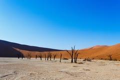 Härligt landskap av gömda Vlei i den Namib öknen Royaltyfria Bilder