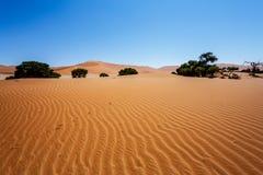 Härligt landskap av gömda Vlei i den Namib öknen Arkivfoto